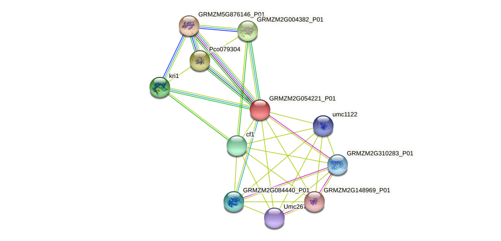 GRMZM2G054221_P01 protein (Zea mays) - STRING interaction network