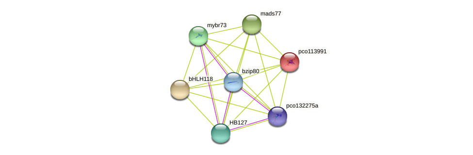 pco113991 protein (Zea mays) - STRING interaction network