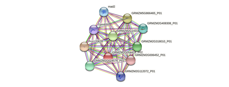 Zm.6227 protein (Zea mays) - STRING interaction network