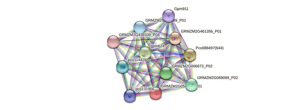 GRMZM2G054468_P01 protein (Zea mays) - STRING interaction network