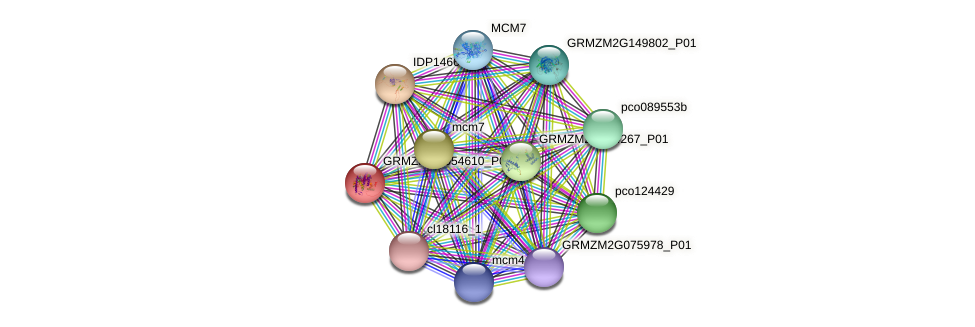 GRMZM2G054610_P01 protein (Zea mays) - STRING interaction network