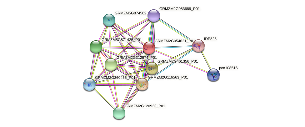 GRMZM2G054621_P01 protein (Zea mays) - STRING interaction network