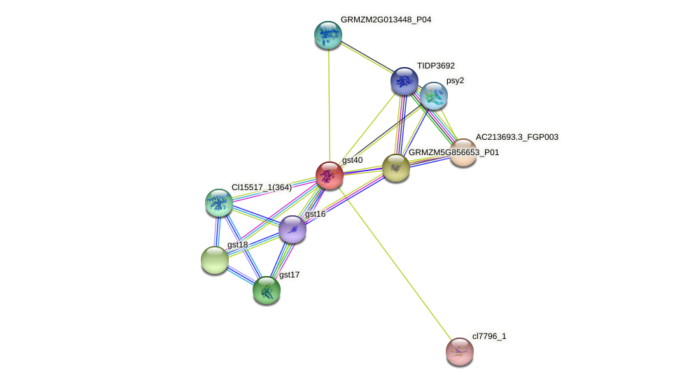 Zm.565 protein (Zea mays) - STRING interaction network