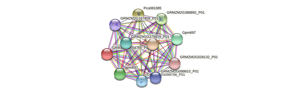 Zm.28130 protein (Zea mays) - STRING interaction network