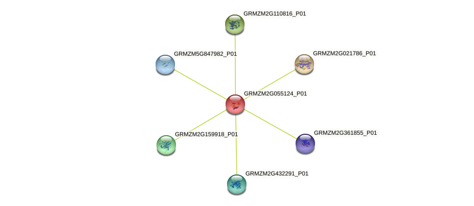 GRMZM2G055124_P01 protein (Zea mays) - STRING interaction network