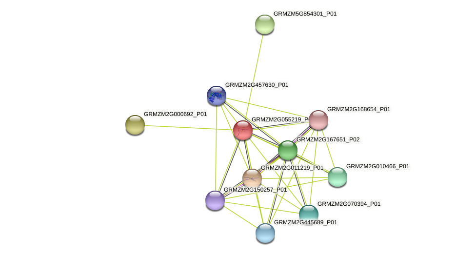 GRMZM2G055219_P01 protein (Zea mays) - STRING interaction network