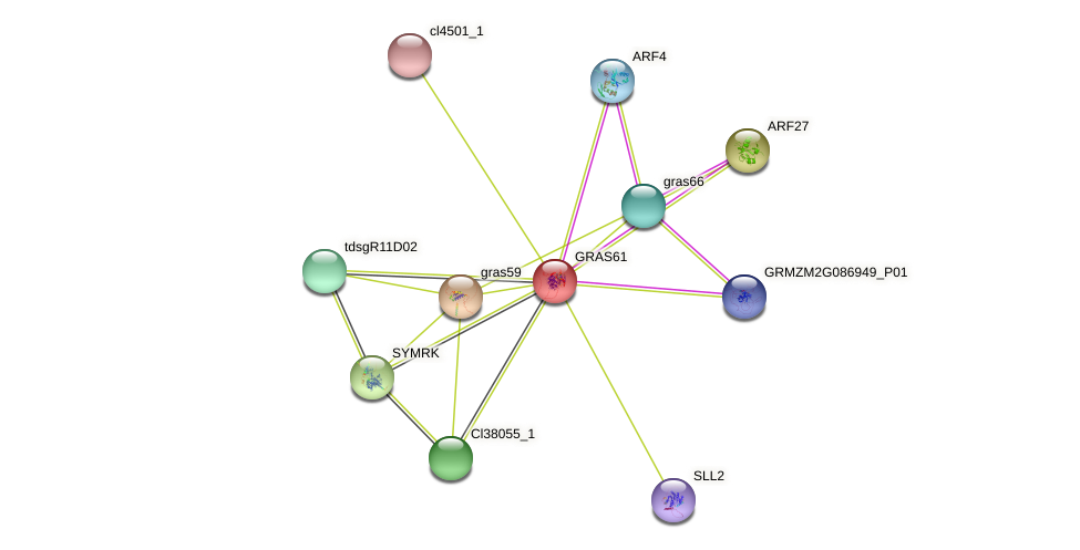 GRAS61 protein (Zea mays) - STRING interaction network