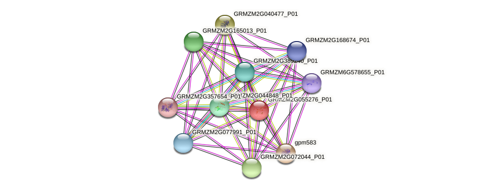 GRMZM2G055276_P01 protein (Zea mays) - STRING interaction network