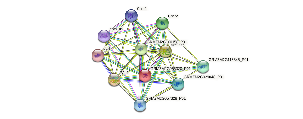 GRMZM2G055320_P01 protein (Zea mays) - STRING interaction network