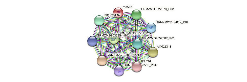 GRMZM2G055464_P01 protein (Zea mays) - STRING interaction network