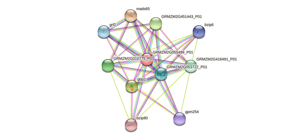 GRMZM2G055499_P01 protein (Zea mays) - STRING interaction network
