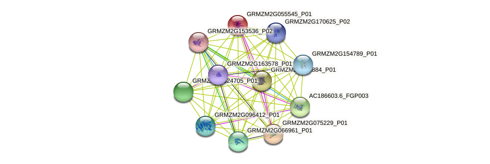 GRMZM2G055545_P01 protein (Zea mays) - STRING interaction network