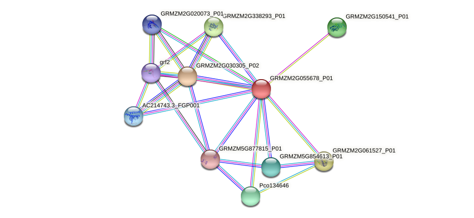 Zm.33135 protein (Zea mays) - STRING interaction network