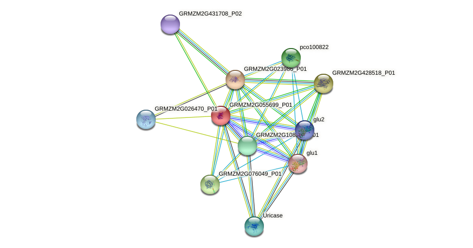 GRMZM2G055699_P01 protein (Zea mays) - STRING interaction network