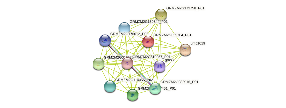 GRMZM2G055704_P01 protein (Zea mays) - STRING interaction network