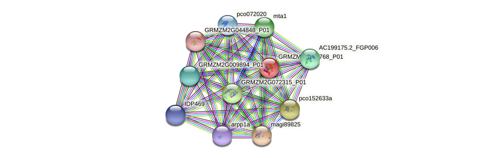 GRMZM2G055768_P01 protein (Zea mays) - STRING interaction network