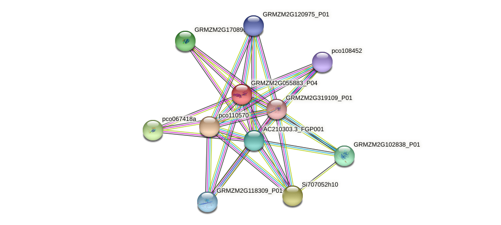 GRMZM2G055883_P04 protein (Zea mays) - STRING interaction network