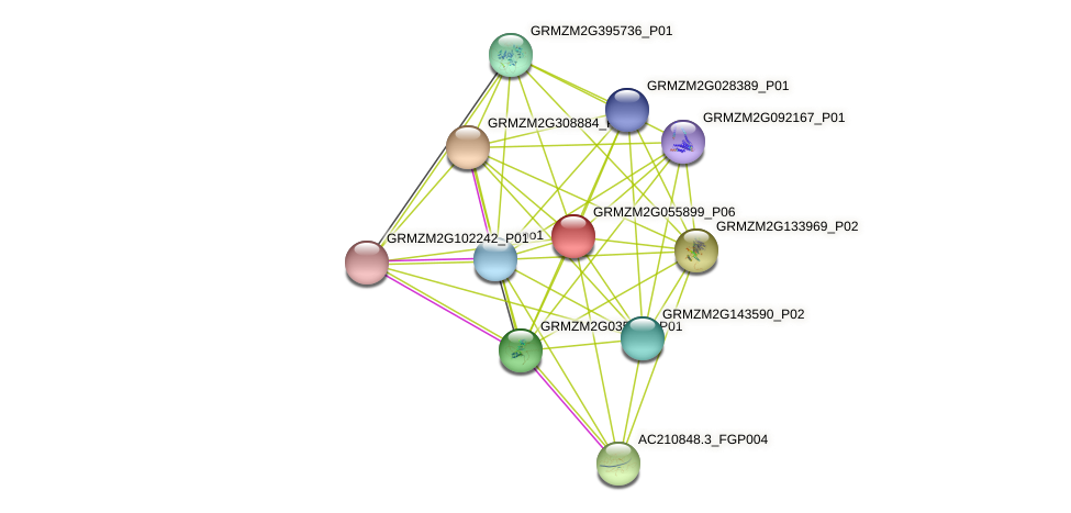 GRMZM2G055899_P06 protein (Zea mays) - STRING interaction network