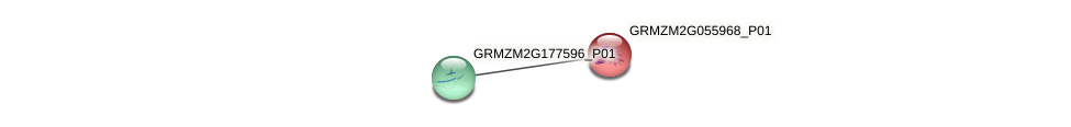 GRMZM2G055968_P01 protein (Zea mays) - STRING interaction network