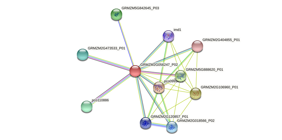GRMZM2G056247_P02 protein (Zea mays) - STRING interaction network