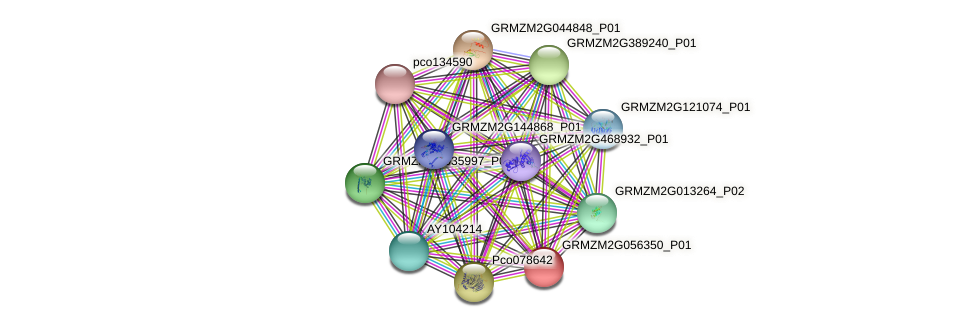 GRMZM2G056350_P01 protein (Zea mays) - STRING interaction network
