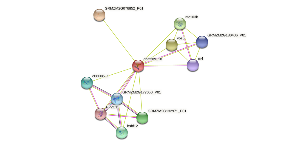 cl52289_1b protein (Zea mays) - STRING interaction network