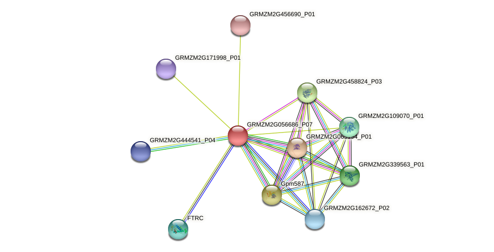 GRMZM2G056686_P07 protein (Zea mays) - STRING interaction network