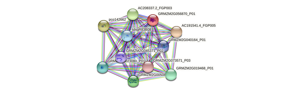 GRMZM2G056870_P01 protein (Zea mays) - STRING interaction network