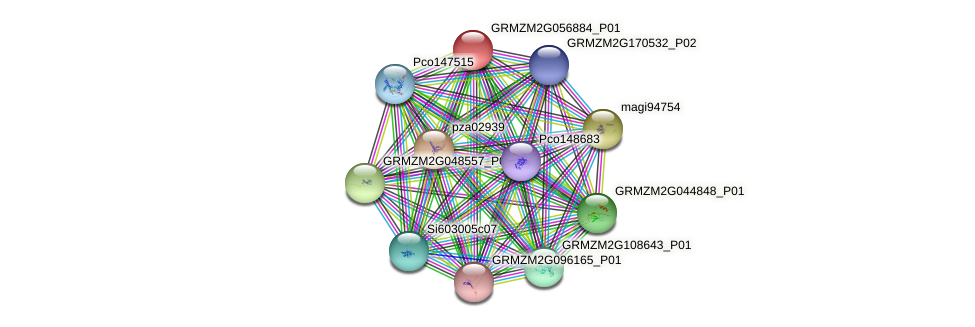 GRMZM2G056884_P01 protein (Zea mays) - STRING interaction network