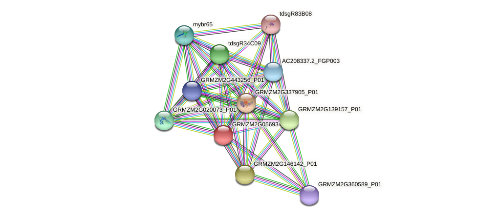 GRMZM2G056934_P01 protein (Zea mays) - STRING interaction network