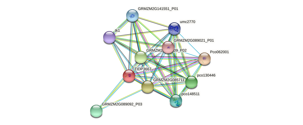 TIDP3667 protein (Zea mays) - STRING interaction network