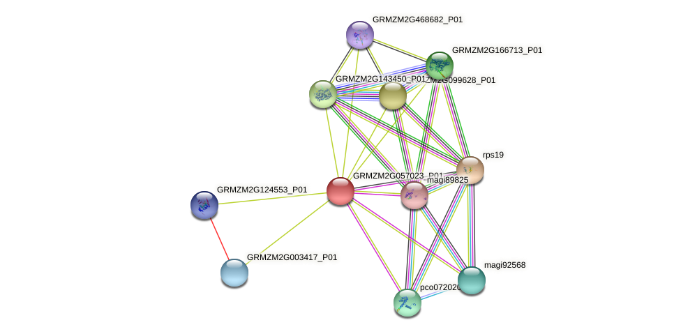 GRMZM2G057023_P01 protein (Zea mays) - STRING interaction network
