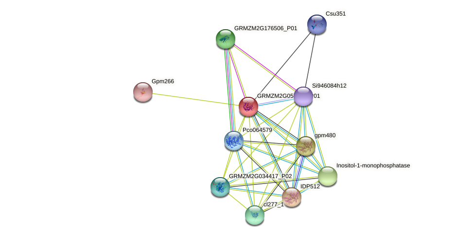 GRMZM2G057186_P01 protein (Zea mays) - STRING interaction network