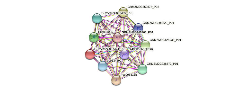 GRMZM2G057374_P01 protein (Zea mays) - STRING interaction network