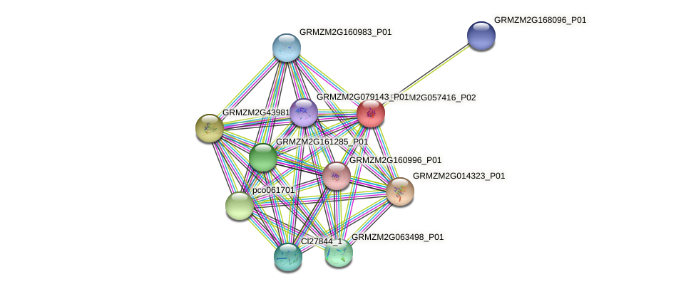 GRMZM2G057416_P02 protein (Zea mays) - STRING interaction network