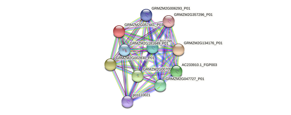GRMZM2G057441_P01 protein (Zea mays) - STRING interaction network