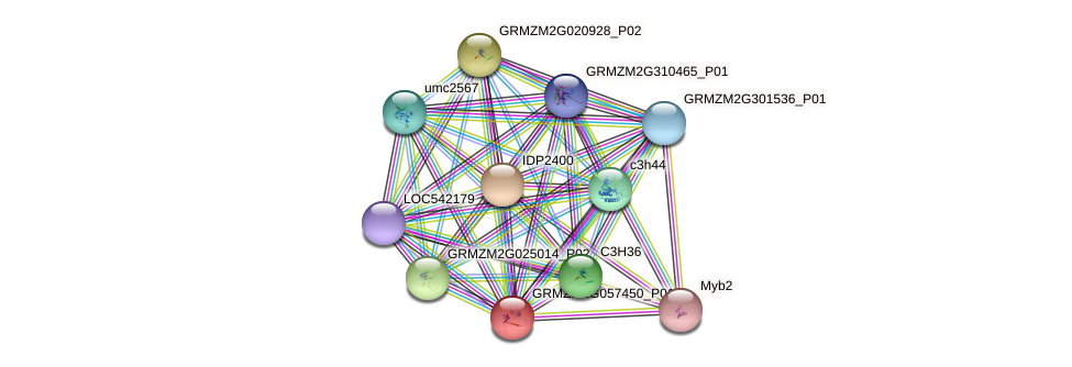 GRMZM2G057450_P01 protein (Zea mays) - STRING interaction network