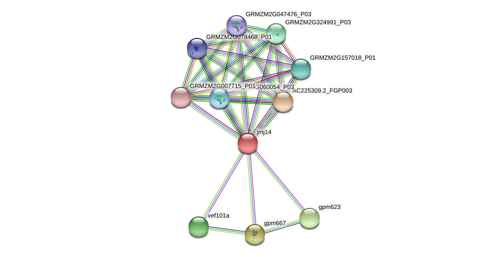 JMJ14 protein (Zea mays) - STRING interaction network