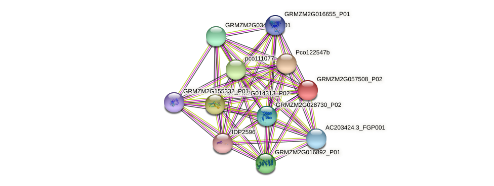 GRMZM2G057508_P02 protein (Zea mays) - STRING interaction network