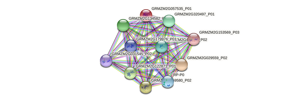 GRMZM2G057535_P01 protein (Zea mays) - STRING interaction network