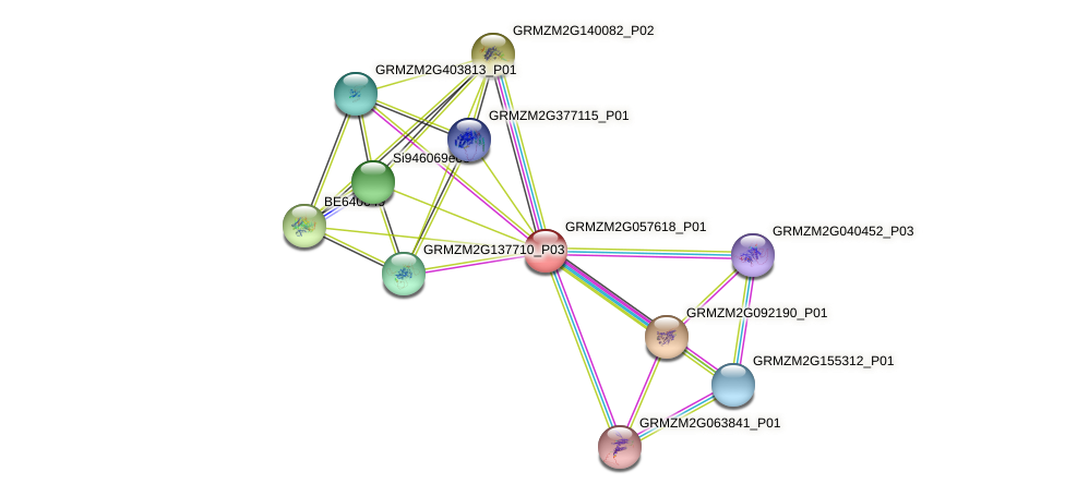 GRMZM2G057618_P01 protein (Zea mays) - STRING interaction network