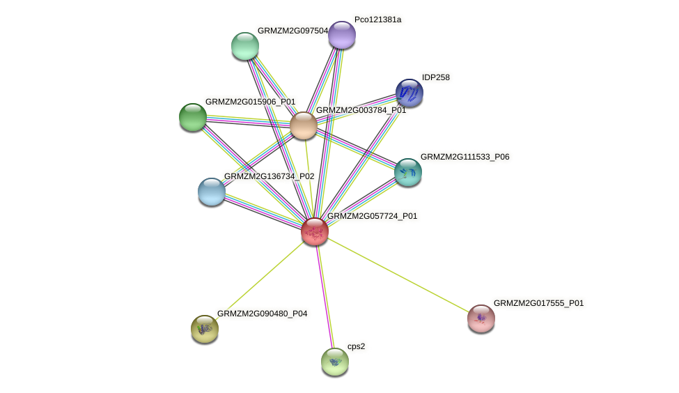 GRMZM2G057724_P01 protein (Zea mays) - STRING interaction network