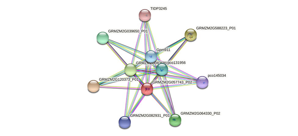 GRMZM2G057743_P02 protein (Zea mays) - STRING interaction network