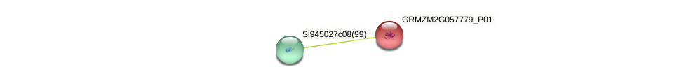 GRMZM2G057779_P01 protein (Zea mays) - STRING interaction network