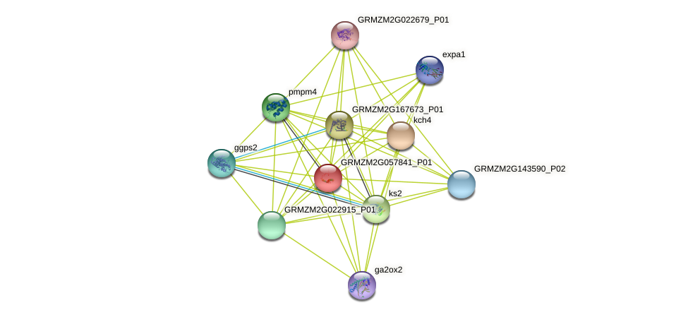 Zm.143114 protein (Zea mays) - STRING interaction network