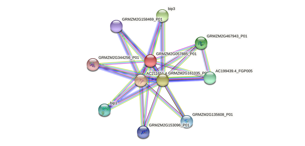 GRMZM2G057885_P01 protein (Zea mays) - STRING interaction network