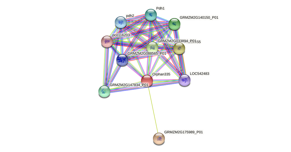 Orphan335 protein (Zea mays) - STRING interaction network