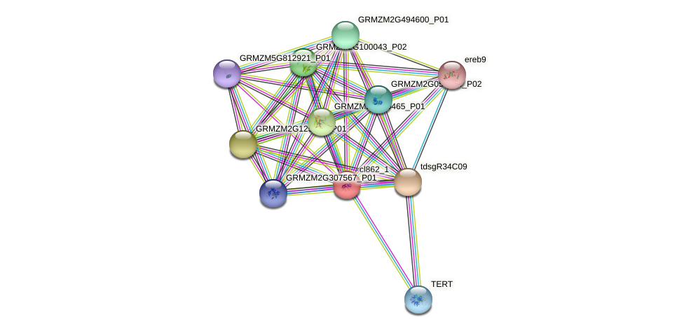 cl862_1 protein (Zea mays) - STRING interaction network