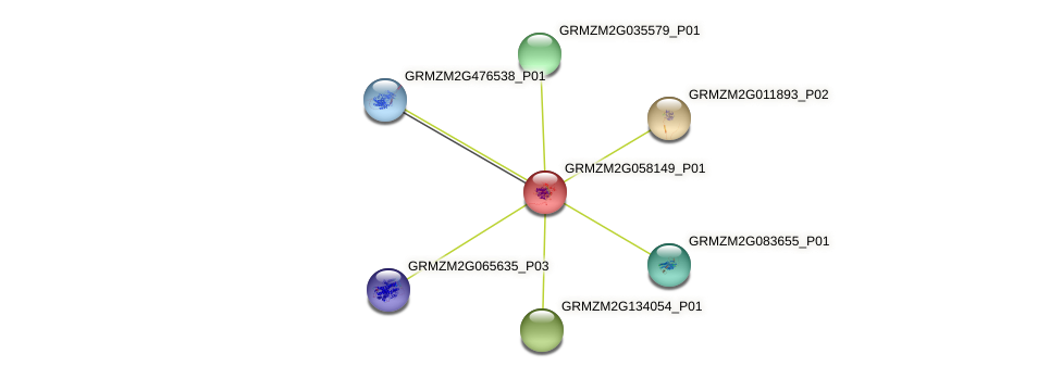 GRMZM2G058149_P01 protein (Zea mays) - STRING interaction network