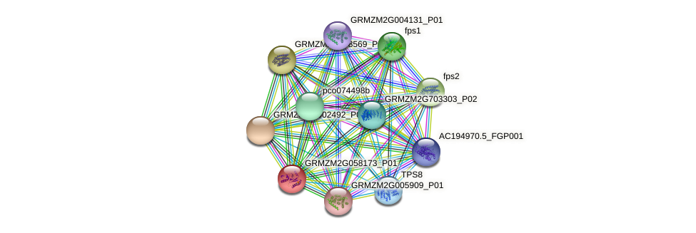 GRMZM2G058173_P01 protein (Zea mays) - STRING interaction network